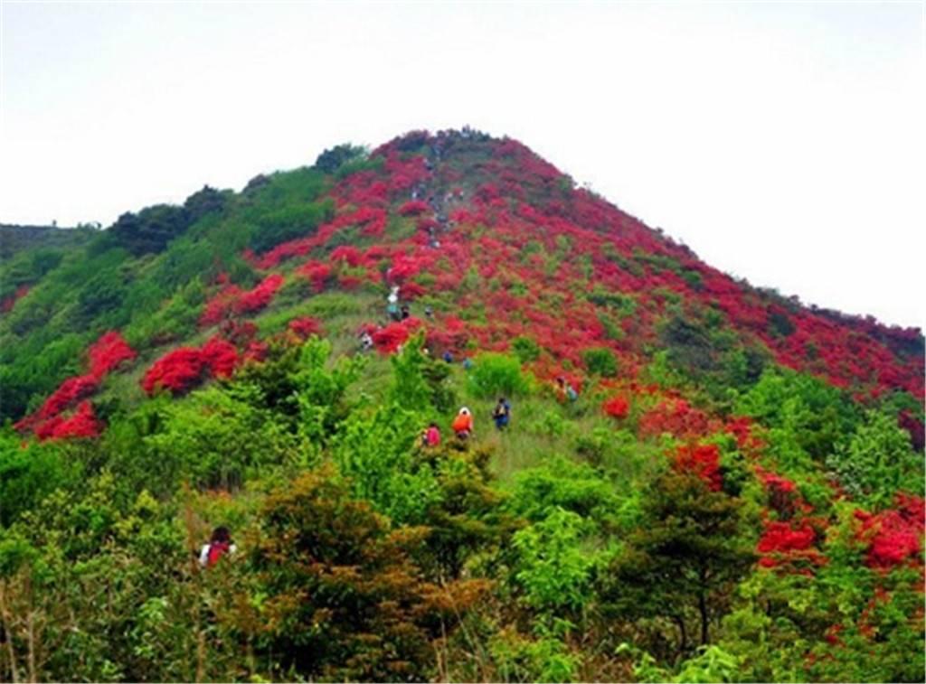 【红遍半边天】从化通天蜡烛登山 看漫山杜鹃花  第2期 3月28日