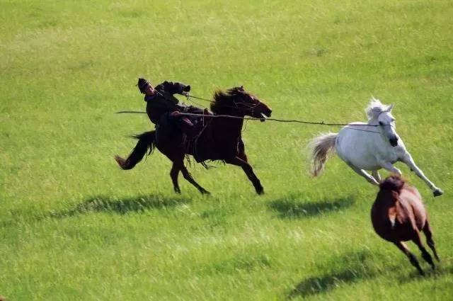【呼伦贝尔】2018年度最佳线路 中俄边境线草原徒步水墨 黑山头骑马穿越