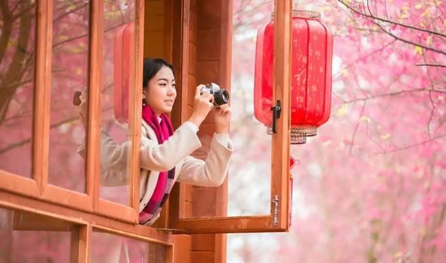 郴州赏樱花