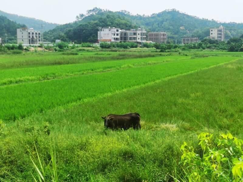 2020.08.30 惠州狮子岛穿越