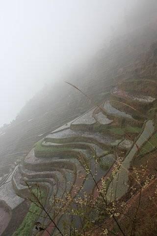 """""""仙境般的梯田。當然,我們時運不濟,遇上濃霧,所以也像仙境般天地間只有彼此沒有風光的_加榜梯田""""的評論圖片"""