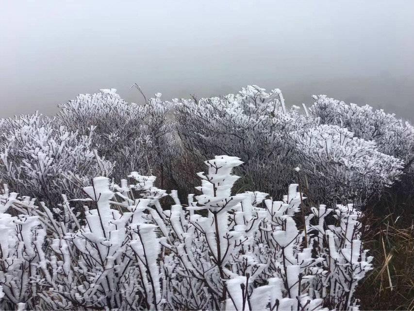 12月17日四方山游記,山頂看霜雪